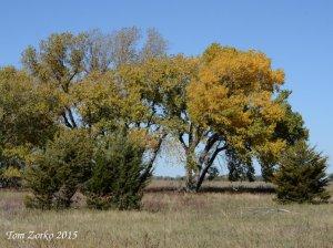 Pretty Trees_102515_v1.jpg