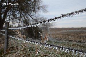 Ice on Fence_112815.jpg