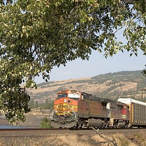 Train in a Tree