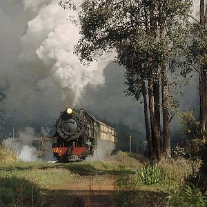 Steam and Timber