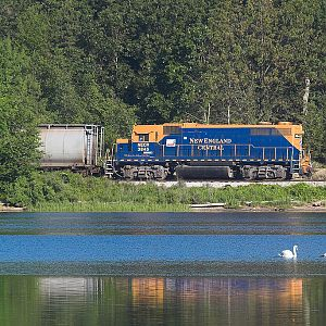 NECR train 610 and a pair of swans on the Thames River