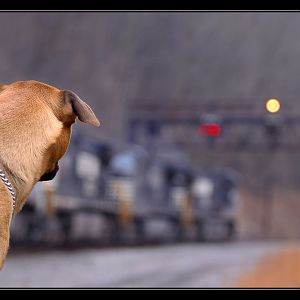 Railfan's Best Friend