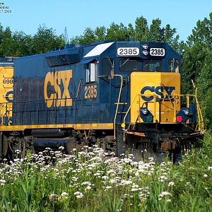 CSX in bloom