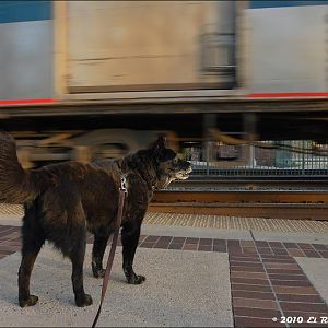 Dogs Dig Trains Too