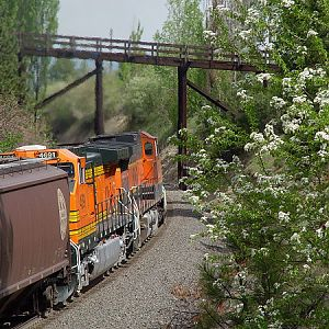 White flowers and BNSF